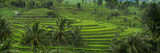 The Jatiluwih Rice Terraces