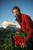 A Tomato Farmer on His Farm in Wisconsin