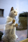 A Cat Pressed Up Against Glass