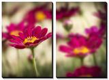Red Flower Petal
