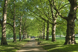 Avenue of Trees in Green Park  London  England  United Kingdom  Europe