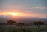 Masai Mara  Kenya  East Africa  Africa