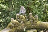 Sacred Monkey Forest  Ubud  Bali  Indonesia  Southeast Asia  Asia