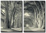 Cypress Tree Road, Point Reyes Tableau multi toiles par Vincent James