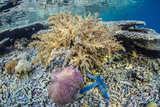 Hard and Soft Corals and Sea Star Underwater on Sebayur Island