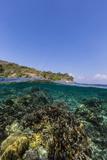Underwater Reef System of the Marine Reserve on Moya Island  Nusa Tenggara Province  Indonesia