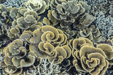 A Profusion of Hard and Soft Coral Underwater on Siaba Kecil
