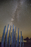 Night View of the Milky Way with Organ Pipe Cactus (Stenocereus Thurberi) in Foreground