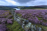 Heather Covered Bamford Moor