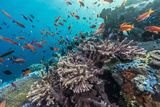 A Profusion of Coral and Reef Fish on Batu Bolong  Komodo Island National Park  Indonesia
