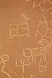 Petroglyphs  Vermilion Cliffs National Monument  Arizona  United States of America  North America
