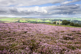 Heather Moorland and Yorkes Folly Near Pateley Bridge  Yorkshire  England  United Kingdom  Europe