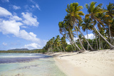 Playa Rincon  Samana Peninsula  Dominican Republic  West Indies  Caribbean  Central America