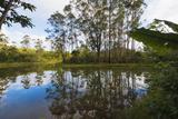 Pond  Andasibe-Mantadia National Park  Madagascar  Africa