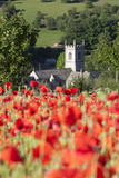 Poppy Field and St Andrew's Church  Naunton  Cotswolds  Gloucestershire  England