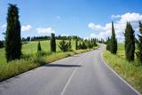 Cypress Trees Line Country Road  Chianti Region  Tuscany  Italy  Europe