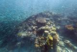 Shoal of Sardines  Panagsama Beach  Moalboal  Cebu  the Visayas  Philippines  Southeast Asia  Asia