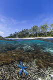 Above and Below View of Coral Reef and Sandy Beach on Jaco Island  Timor Sea  East Timor  Asia