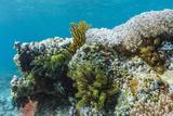 Underwater Reef System on Pink Sand Beach  Komodo National Park  Komodo Island  Indonesia