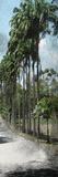 Palm Yard