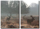 Three Large Deer Stags in the Early Morning Mist in Richmond Park