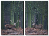 Two Large Deer Stags Stand their Ground in Forest in Winter