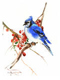 Blue Jay 13