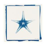 Cyan Starfish