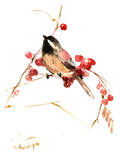 Chickadee 13