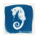 Cyan Seahorse
