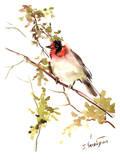 Red-Headed_Warbler