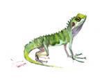 Agama Lizard Reproduction d'art par Suren Nersisyan