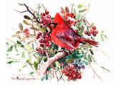 Red Cardinal 6