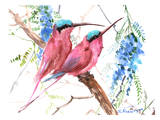 Pink Bee Eaters