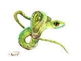 Florida Rough Green Snake