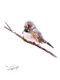 Zebrafinch