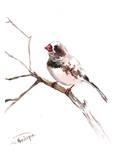 Zebrafinch 2