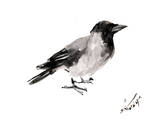 Hooded Crow 4