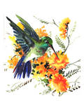 Hummingbird 6