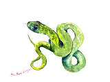 Florida Rough Green Snake 2