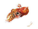 Squid 2 Reproduction d'art par Suren Nersisyan