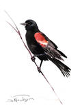 Red_Winged Blackbird