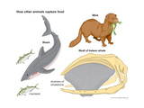 How Different Animals Capture Food