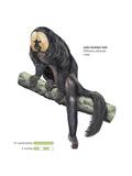 Male Pale-Headed Saki Monkey (Pithecia Pithecia)