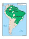 Rainforest Culture Area