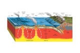 Volcanic Activity and the Earth's Tectonic Plates