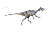 Eoraptor  Late Triassic Dinosaur This Tiny Carnivore Is Close to What the Common Ancestor