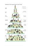 Classification Tree of the Species Homo Sapiens (Modern Humans) Within the Order Primates