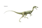 Coelophysis  a Late Triassic Dinosaur a Predator Living in Large Herds
