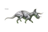 "Triceratops  ""Three-Horned Face "" Massive Late Cretaceous Herbivore"